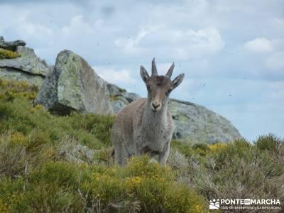Cuerda Larga - Serie Clásica;licencia montaña parque natural fuentes carrionas crucero por el guad